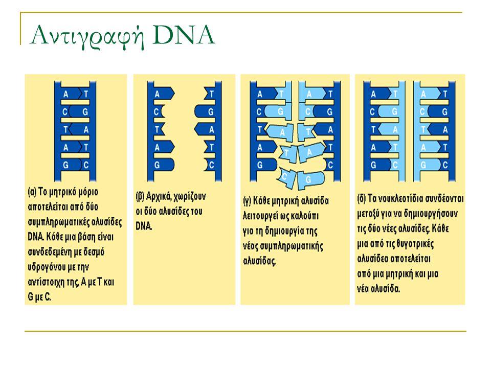 Αντιγραφή DNA