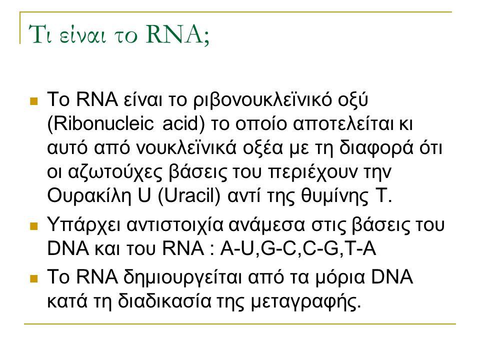 Τι είναι το RNA; Το RNA είναι το ριβονουκλεϊνικό οξύ (Ribonucleic acid) το οποίο αποτελείται κι αυτό από νουκλεϊνικά οξέα με τη διαφορά ότι οι αζωτούχ