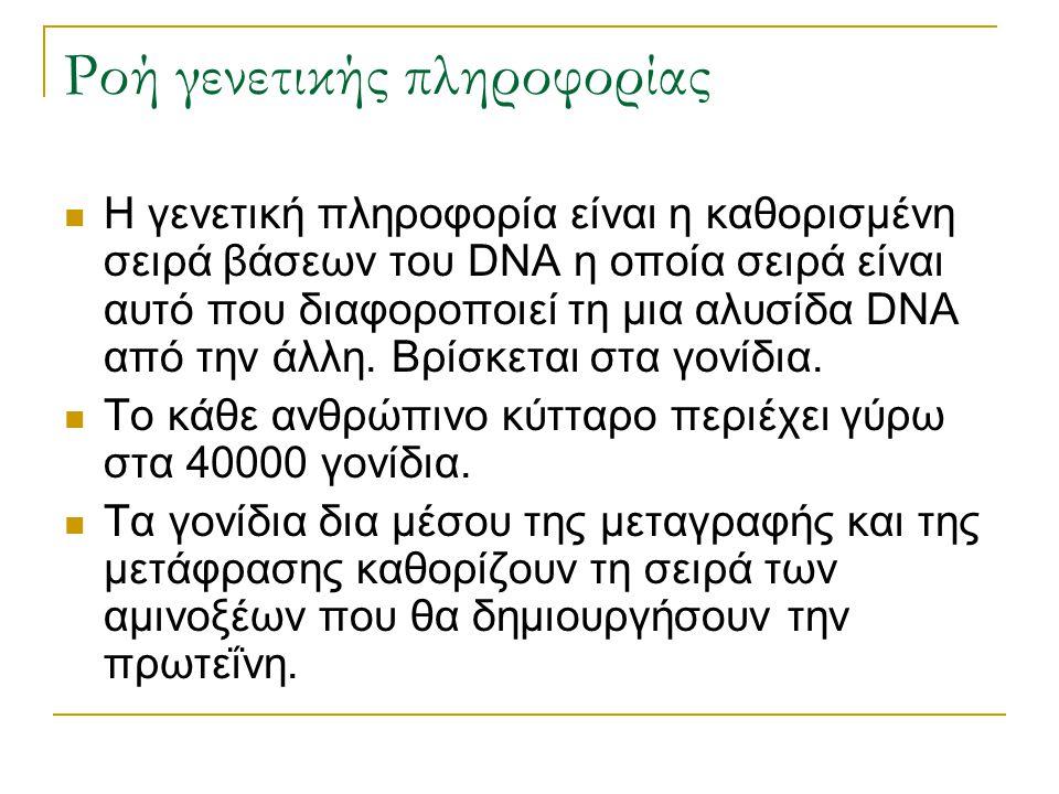 Ροή γενετικής πληροφορίας Η γενετική πληροφορία είναι η καθορισμένη σειρά βάσεων του DNA η οποία σειρά είναι αυτό που διαφοροποιεί τη μια αλυσίδα DNA