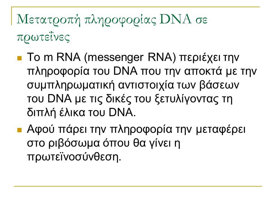Μετατροπή πληροφορίας DNA σε πρωτεΐνες To m RNA (messenger RNA) περιέχει την πληροφορία του DNA που την αποκτά με την συμπληρωματική αντιστοιχία των β