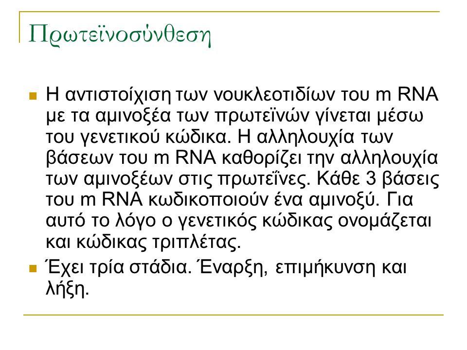 Πρωτεϊνοσύνθεση Η αντιστοίχιση των νουκλεοτιδίων του m RNA με τα αμινοξέα των πρωτεϊνών γίνεται μέσω του γενετικού κώδικα. Η αλληλουχία των βάσεων του