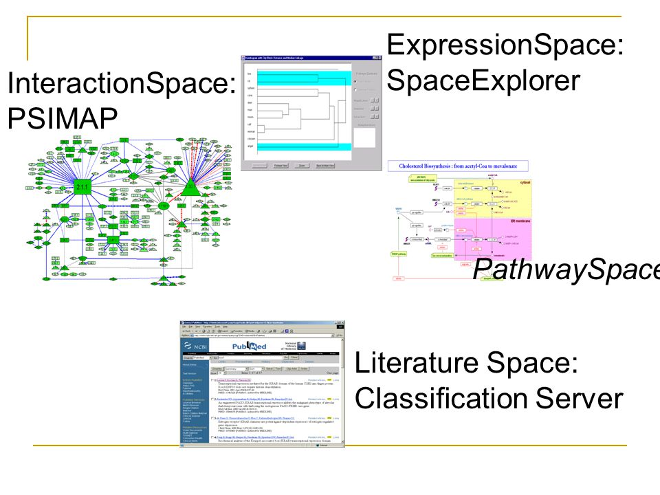 ExpressionSpace: SpaceExplorer InteractionSpace: PSIMAP Literature Space: Classification Server PathwaySpace