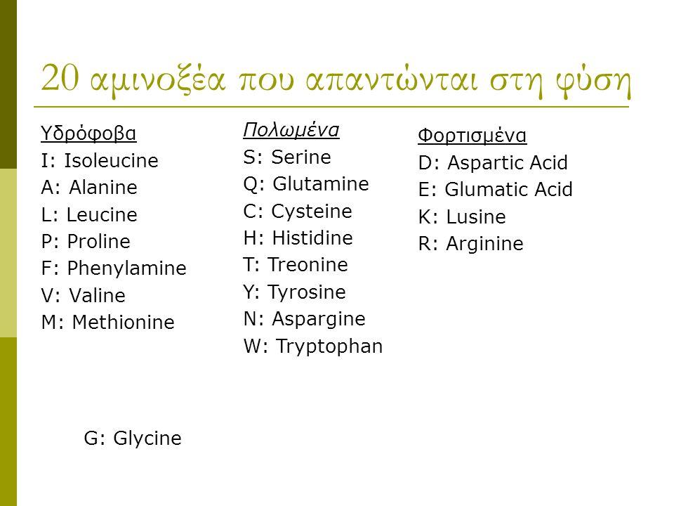 20 αμινοξέα που απαντώνται στη φύση Υδρόφοβα I: Isoleucine A: Alanine L: Leucine P: Proline F: Phenylamine V: Valine M: Methionine Πολωμένα S: Serine