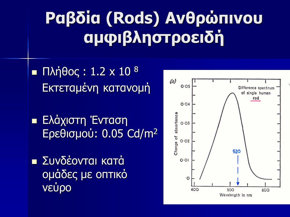 Ραβδία (Rods) Ανθρώπινου αμφιβληστροειδή Πλήθος : 1.2 x 10 8 Πλήθος : 1.2 x 10 8 Εκτεταμένη κατανομή Εκτεταμένη κατανομή Ελάχιστη Ένταση Ερεθισμού: 0.
