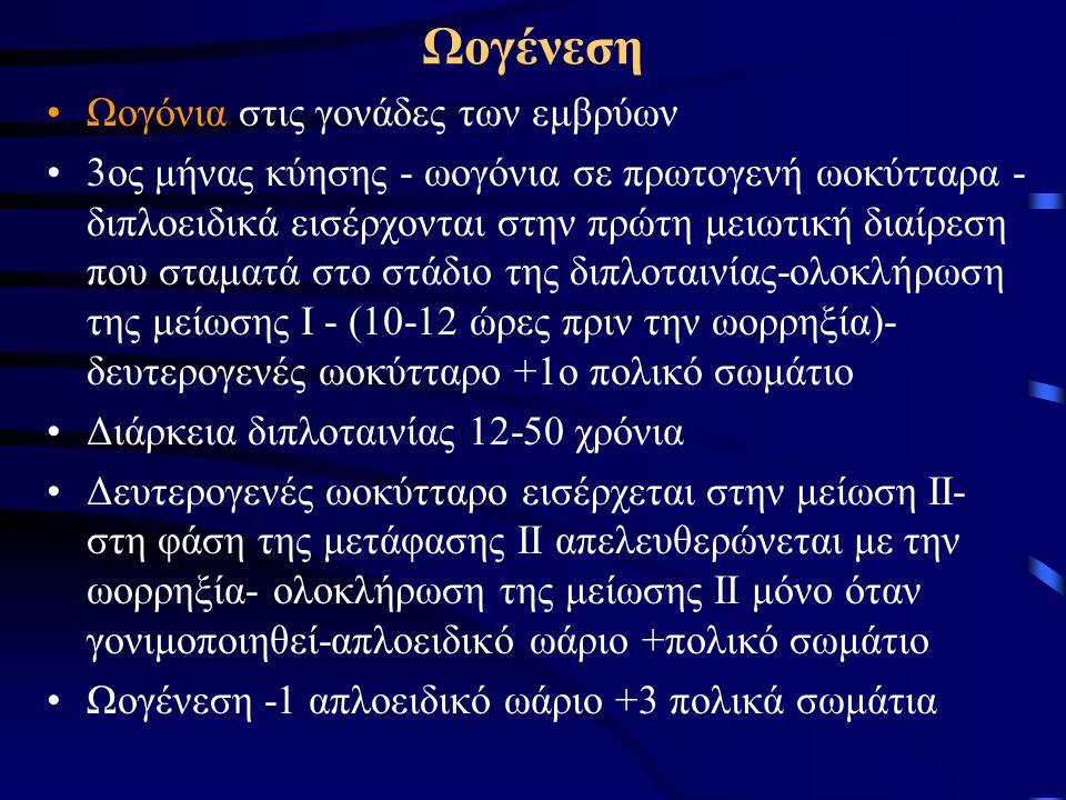 Ωογένεση Ωογόνια στις γονάδες των εμβρύων 3ος μήνας κύησης - ωογόνια σε πρωτογενή ωοκύτταρα - διπλοειδικά εισέρχονται στην πρώτη μειωτική διαίρεση που σταματά στο στάδιο της διπλοταινίας-ολοκλήρωση της μείωσης Ι - (10-12 ώρες πριν την ωορρηξία)- δευτερογενές ωοκύτταρο +1ο πολικό σωμάτιο Διάρκεια διπλοταινίας 12-50 χρόνια Δευτερογενές ωοκύτταρο εισέρχεται στην μείωση ΙΙ- στη φάση της μετάφασης ΙΙ απελευθερώνεται με την ωορρηξία- ολοκλήρωση της μείωσης ΙΙ μόνο όταν γονιμοποιηθεί-απλοειδικό ωάριο +πολικό σωμάτιο Ωογένεση -1 απλοειδικό ωάριο +3 πολικά σωμάτια