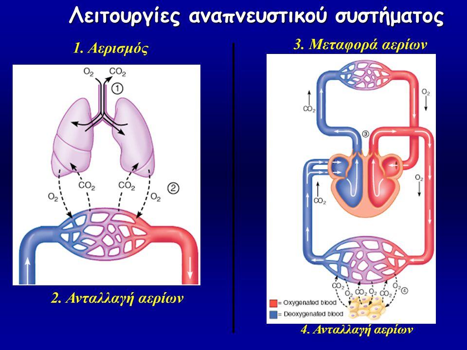 1. Αερισμός 2. Ανταλλαγή αερίων 3. Μεταφορά αερίων 4. Ανταλλαγή αερίων Λειτουργίες αναπνευστικού συστήματος