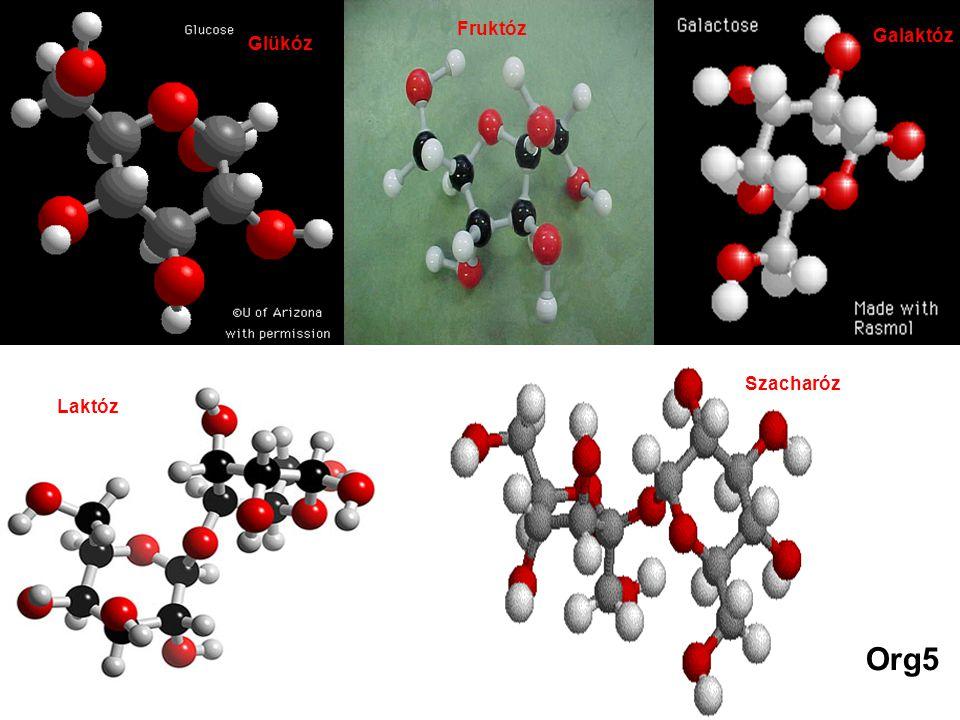 Glükóz Fruktóz Galaktóz Laktóz Szacharóz Org5