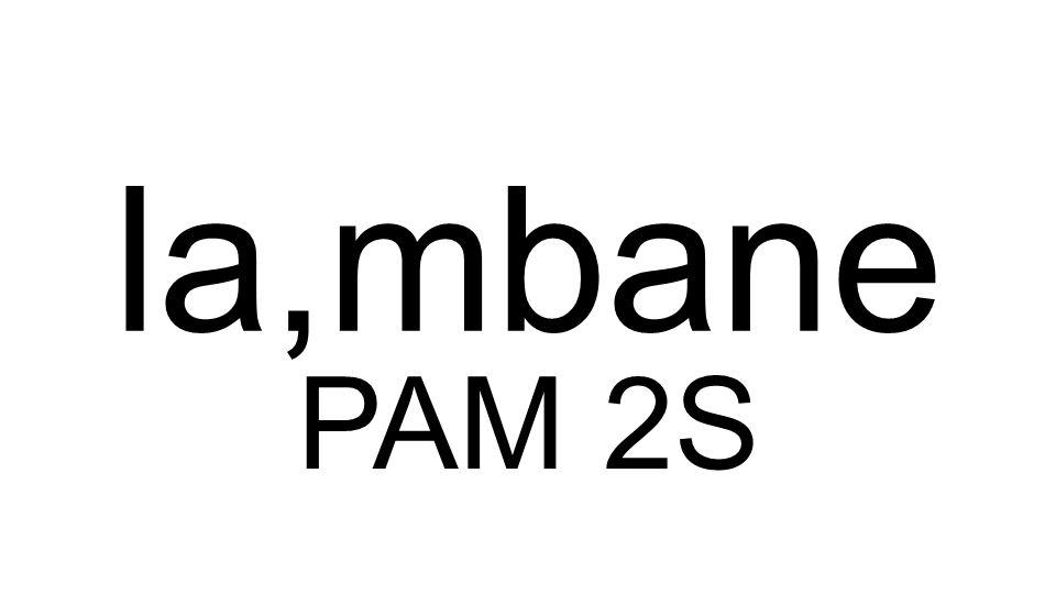 PAM 2S