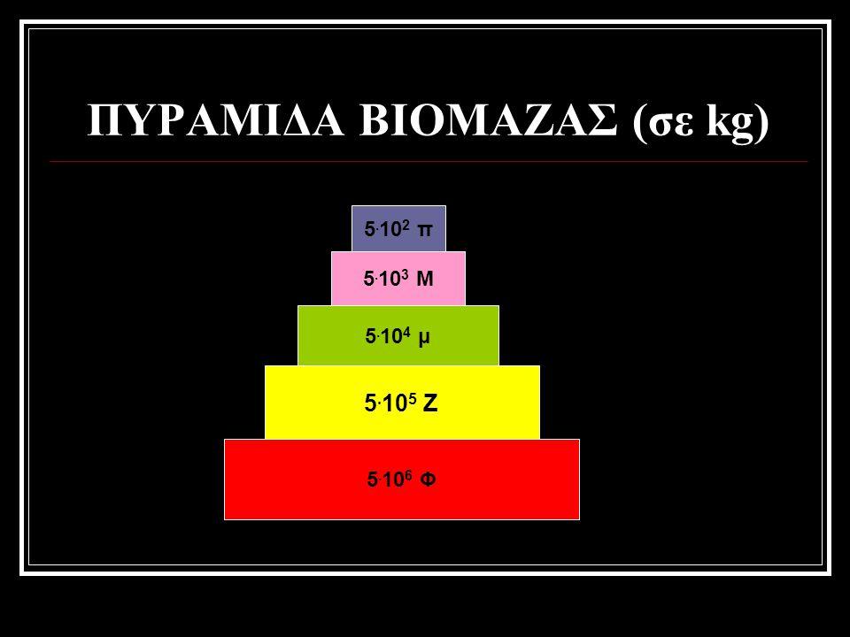 5. 10 6 Φ 5. 10 5 Ζ 5. 10 4 μ 5. 10 3 Μ 5. 10 2 π ΠΥΡΑΜΙΔΑ ΒΙΟΜΑΖΑΣ (σε kg)