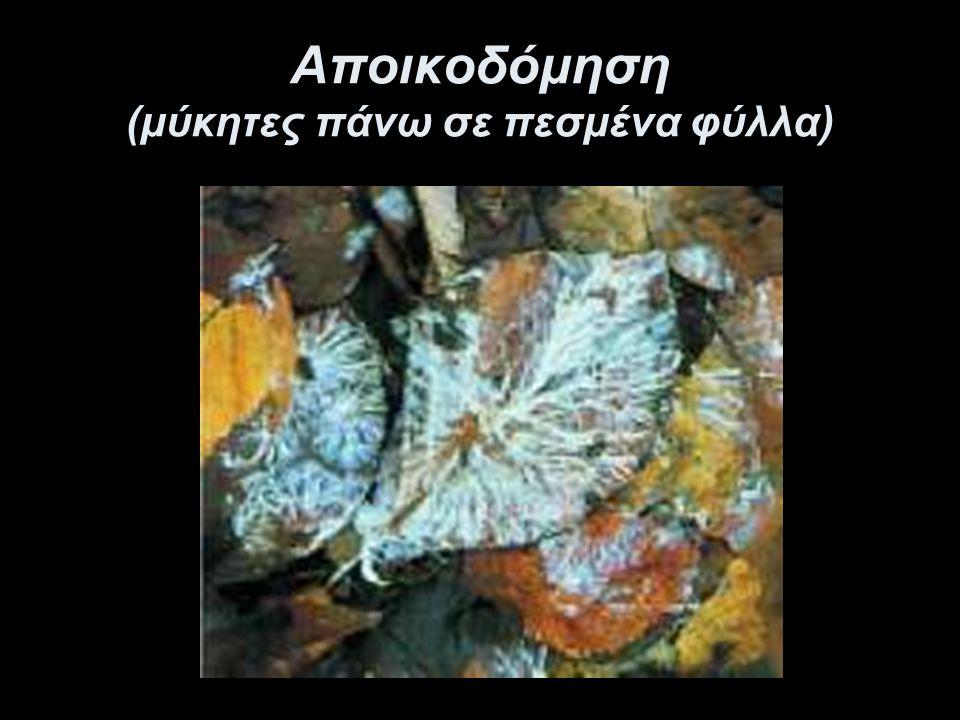 Αποικοδομητές Στους αποικοδομητές ανήκουν: τα βακτήρια του εδάφους και οι μύκητες που τρέφονται με τη νεκρή οργανική ύλη (φύλλα, καρπούς, απεκκρίσεις, τρίχες, σώματα νεκρών οργανισμών).