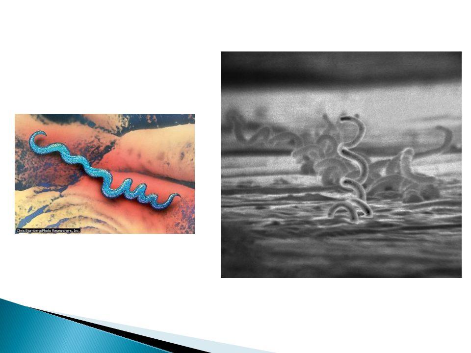 Η γονοκκοκική ουρηθρίτιδα είναι μία φλεγμονή του βλεννογόνου της ουρήθρας που οφείλεται στο μικρόβιο γονοκόκκο του Neisser.
