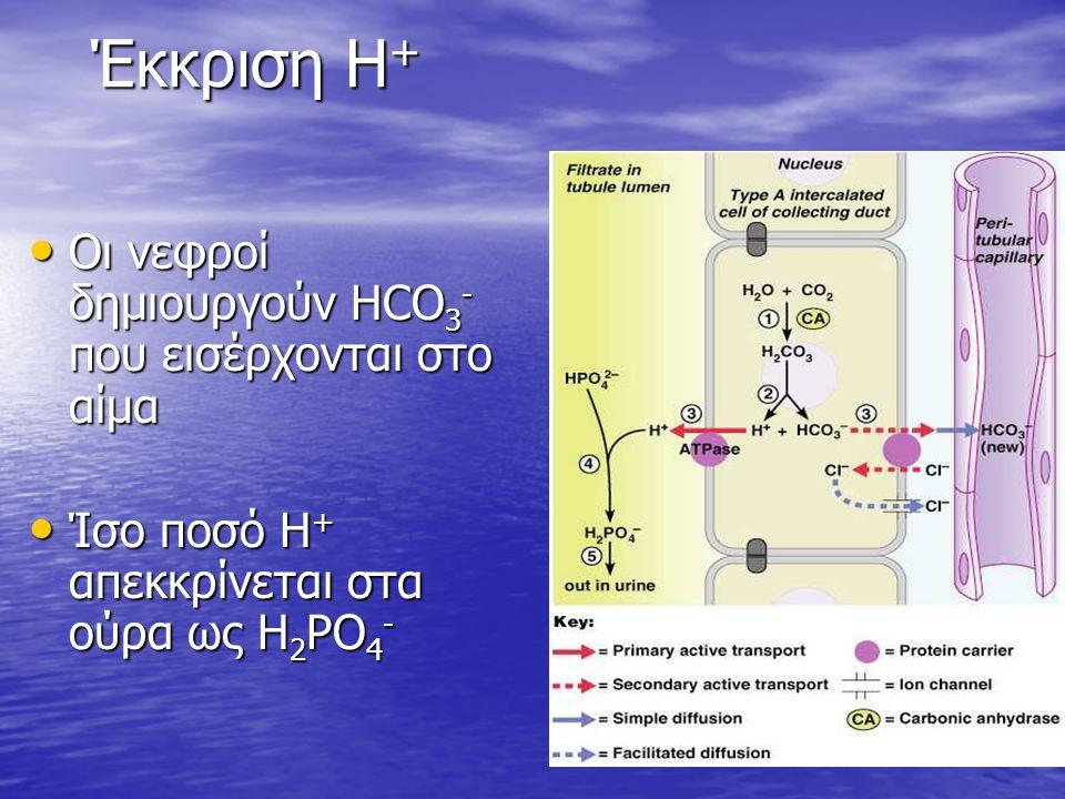 Έκκριση Η + Οι νεφροί δημιουργούν HCO 3 - που εισέρχονται στο αίμα Οι νεφροί δημιουργούν HCO 3 - που εισέρχονται στο αίμα Ίσο ποσό Η + απεκκρίνεται στ
