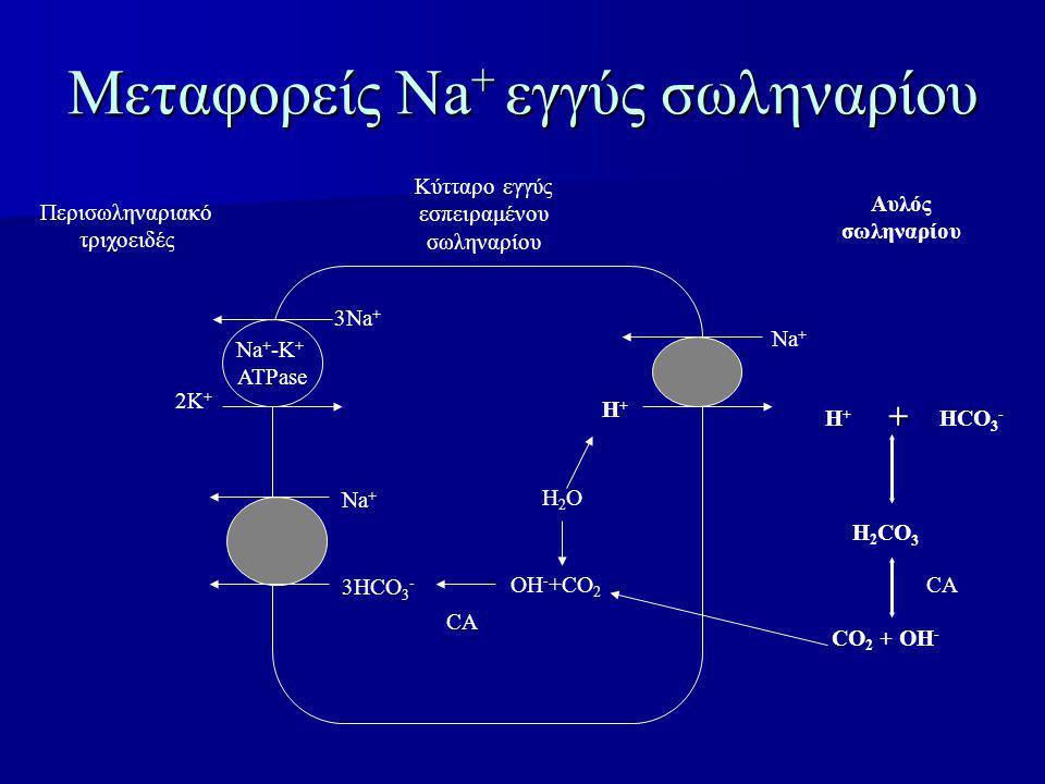 Μεταφορείς Νa + εγγύς σωληναρίου Na + 3HCO 3 - H2OH2O OH - +CO 2 Η+Η+ Na + 3Na + 2K + Na + -K + ATPase Περισωληναριακό τριχοειδές Κύτταρο εγγύς εσπειρ