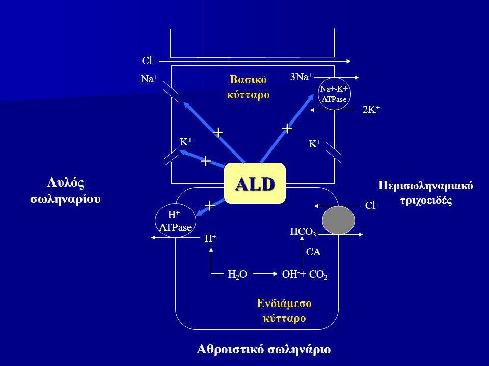 Na+-K+ ATPase 3Na + 2K + Κ+Κ+ Κ+Κ+ Νa+Νa+ Cl - Βασικό κύτταρο H + ATPase H+H+ H2OH2O Cl - HCO 3 - OH - + CO 2 CA Αθροιστικό σωληνάριο Αυλός σωληναρίου