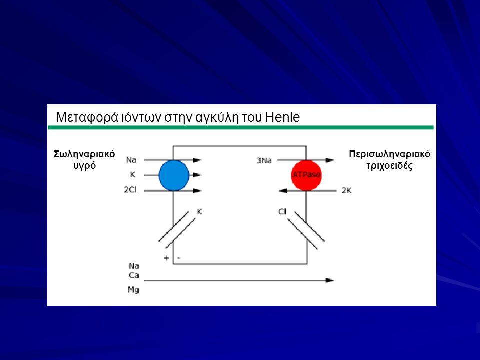 Μεταφορά ιόντων στην αγκύλη του Henle Περισωληναριακό τριχοειδές Σωληναριακό υγρό