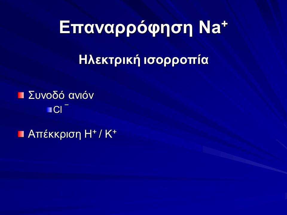 Επαναρρόφηση Na + Ηλεκτρική ισορροπία Συνοδό ανιόν Cl ¯ Απέκκριση H + / K +