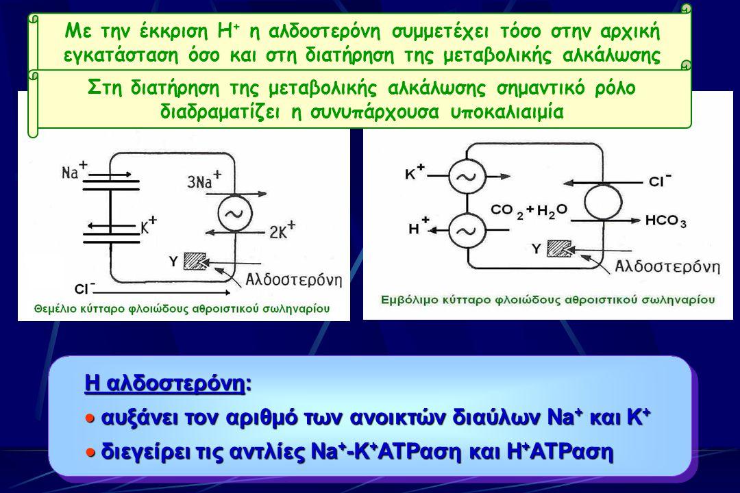 Πρωτοπαθής Υπεραλδοστερονισμός Η αλδοστερόνη:  αυξάνει τον αριθμό των ανοικτών διαύλων Na + και K +  διεγείρει τις αντλίες Na + -K + ATPαση και H + ATPαση Η αλδοστερόνη:  αυξάνει τον αριθμό των ανοικτών διαύλων Na + και K +  διεγείρει τις αντλίες Na + -K + ATPαση και H + ATPαση Με την έκκριση Η + η αλδοστερόνη συμμετέχει τόσο στην αρχική εγκατάσταση όσο και στη διατήρηση της μεταβολικής αλκάλωσης Στη διατήρηση της μεταβολικής αλκάλωσης σημαντικό ρόλο διαδραματίζει η συνυπάρχουσα υποκαλιαιμία