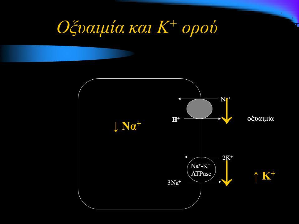 Οξυαιμία και Κ + ορού Η+Η+ Na + 3Na + 2K + Na + -K + ATPase οξυαιμία ↓ ↓ Να + ↓ ↑ Κ +
