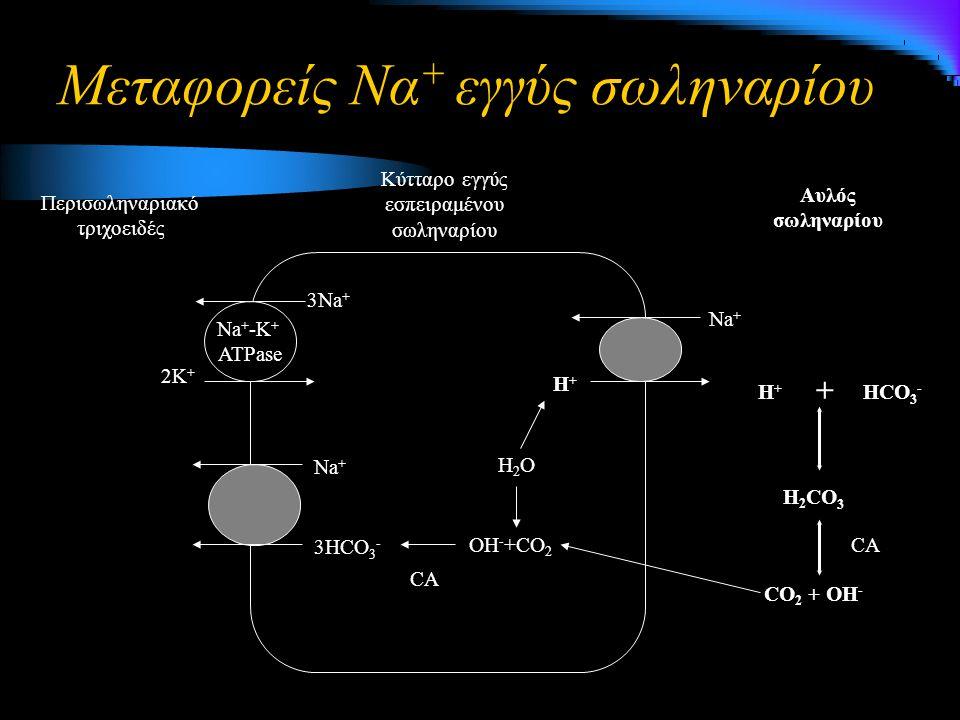 Μεταφορείς Να + εγγύς σωληναρίου Na + 3HCO 3 - H2OH2O OH - +CO 2 Η+Η+ Na + 3Na + 2K + Na + -K + ATPase Περισωληναριακό τριχοειδές Κύτταρο εγγύς εσπειραμένου σωληναρίου Αυλός σωληναρίου HCO 3 - CO 2 + OH - CA Η+Η+ + H 2 CO 3 CA
