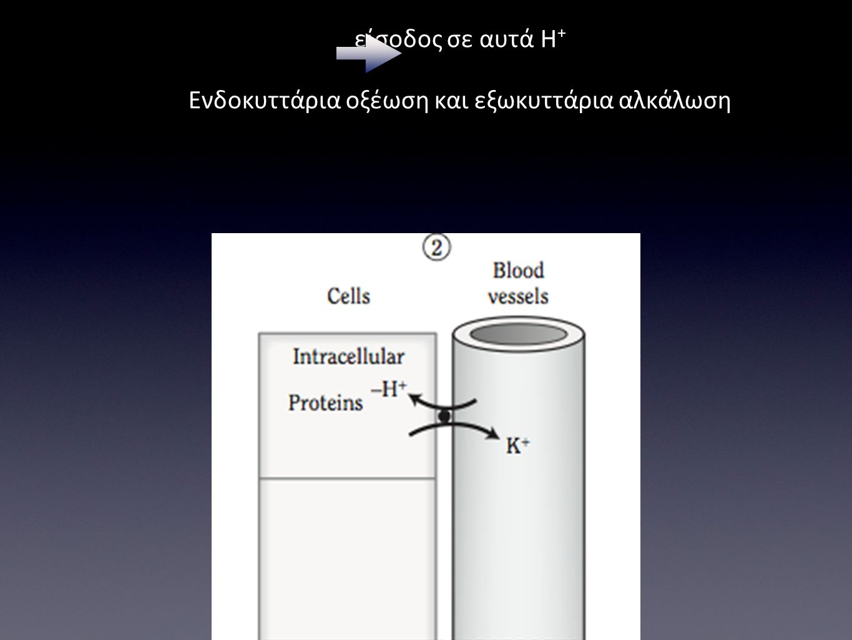 Υποκαλιαιμία έξοδος Κ + από τα κύτταρα και είσοδος σε αυτά Η + Ενδοκυττάρια οξέωση και εξωκυττάρια αλκάλωση