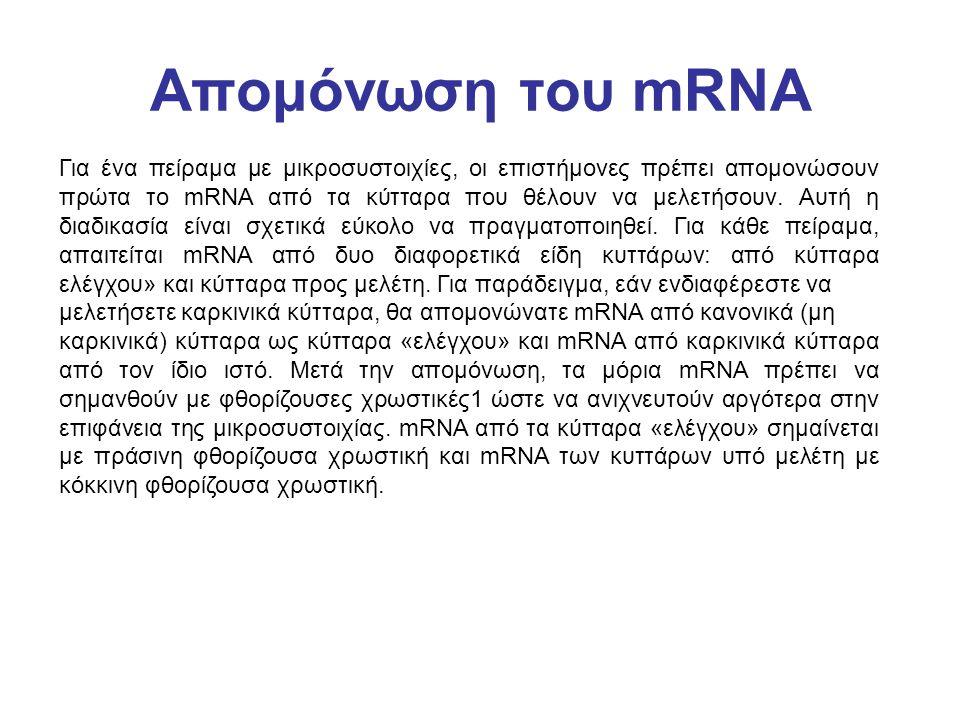 Απομόνωση του mRNA Για ένα πείραμα με μικροσυστοιχίες, οι επιστήμονες πρέπει απομονώσουν πρώτα το mRNA από τα κύτταρα που θέλουν να μελετήσουν. Αυτή η