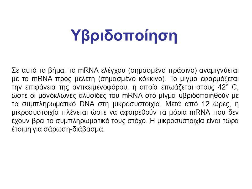 Υβριδοποίηση Σε αυτό το βήμα, το mRNA ελέγχου (σημασμένο πράσινο) αναμιγνύεται με το mRNA προς μελέτη (σημασμένο κόκκινο). To μίγμα εφαρμόζεται την επ