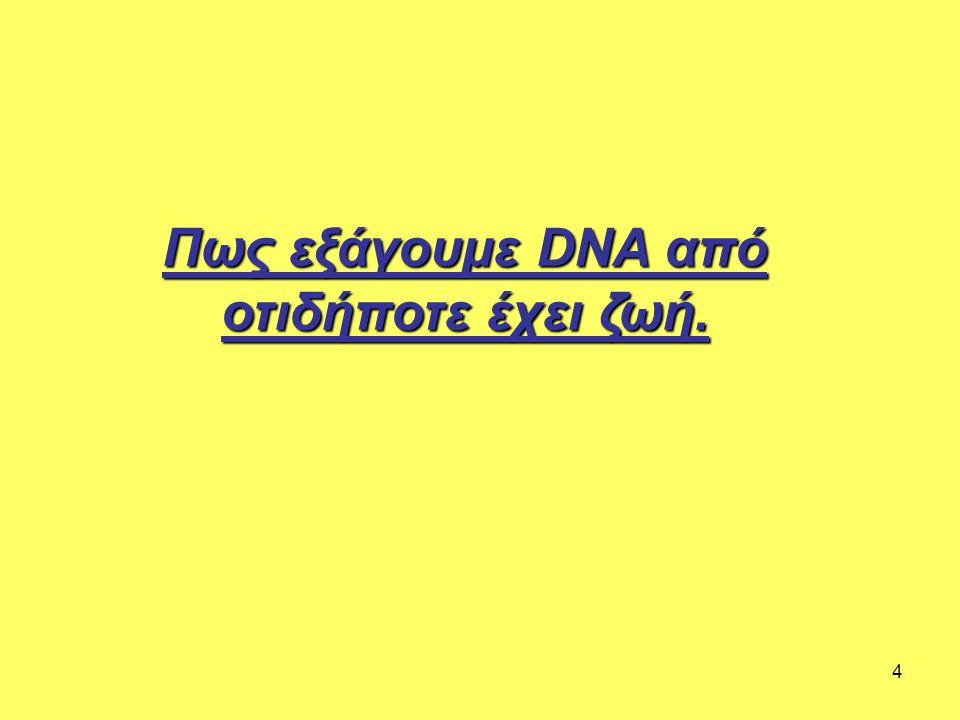 4 Πως εξάγουμε DNA από οτιδήποτε έχει ζωή.