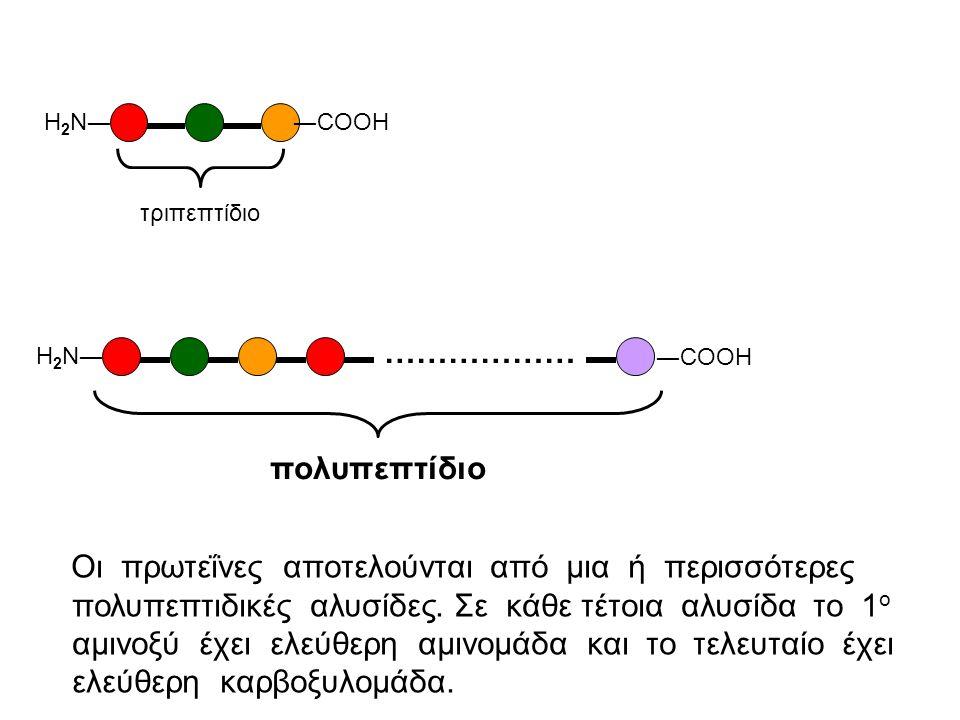 Πως ενώνονται δυο αμινοξέα; H │ NΗ ―C― COOH │ R 2 H │ H 2 N ―C― COOH + │ R 1 H │ H 2 N ―C― COOH │ R 2 αμινοξύ 1 αμινοξύ 2 → H │ H 2 N ―C― CO― │ R 1 -Η