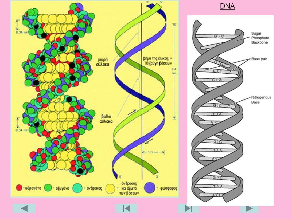 21 DNA
