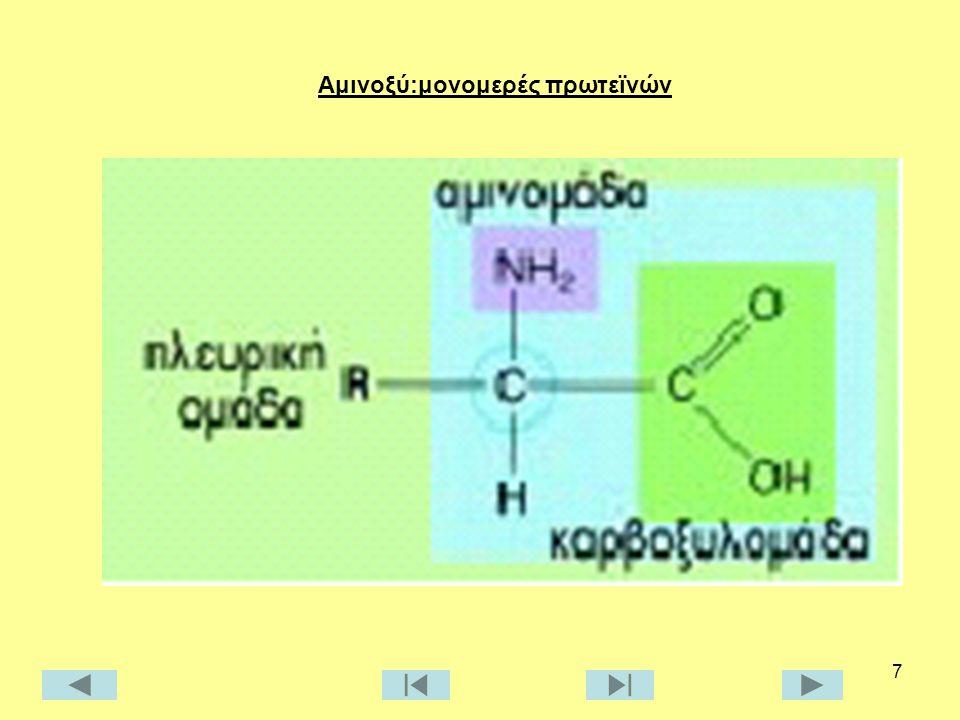 7 Αμινοξύ:μονομερές πρωτεϊνών