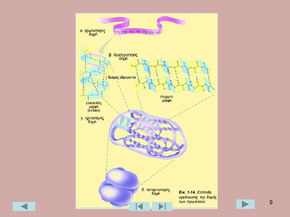 30 Διπλοστιβάδα λιπιδίων και σχηματισμός μεμβράνης Υδρόφοβα άκρα