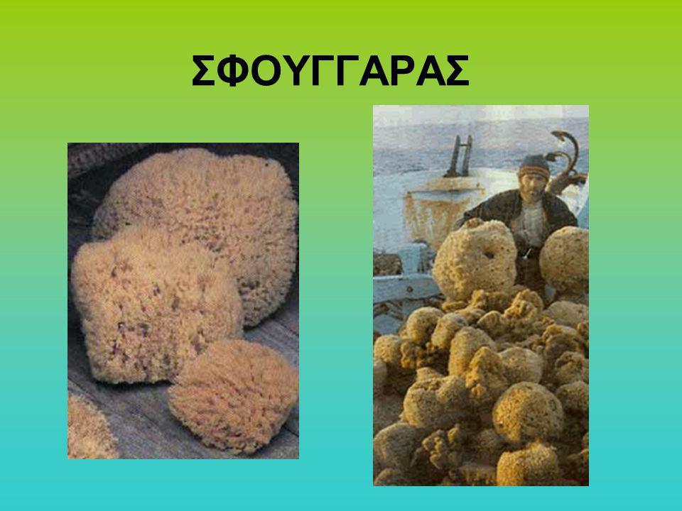 ΣΦΟΥΓΓΑΡΑΣ