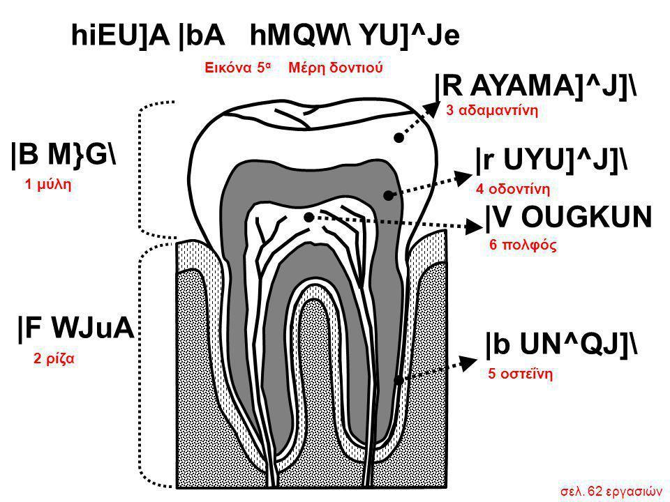 Εικόνα 5 α Μέρη δοντιού σελ. 62 εργασιών 1 μύλη 2 ρίζα 3 αδαμαντίνη 4 οδοντίνη 5 οστεΐνη 6 πολφός hiEU]A  bA hMQW\ YU]^Je  B M}G\  F WJuA  R AYAMA]^J]