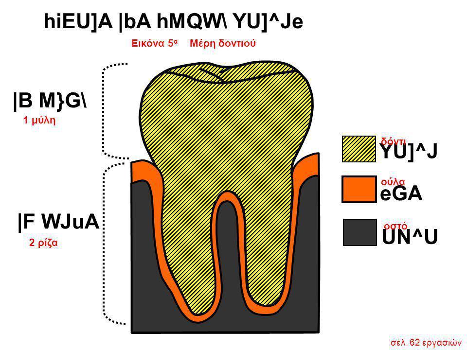 Εικόνα 5 α Μέρη δοντιού σελ. 62 εργασιών hiEU]A  bA hMQW\ YU]^Je 1 μύλη 2 ρίζα  B M}G\  F WJuA YU]^J eGA UN^U δόντι ούλα οστό