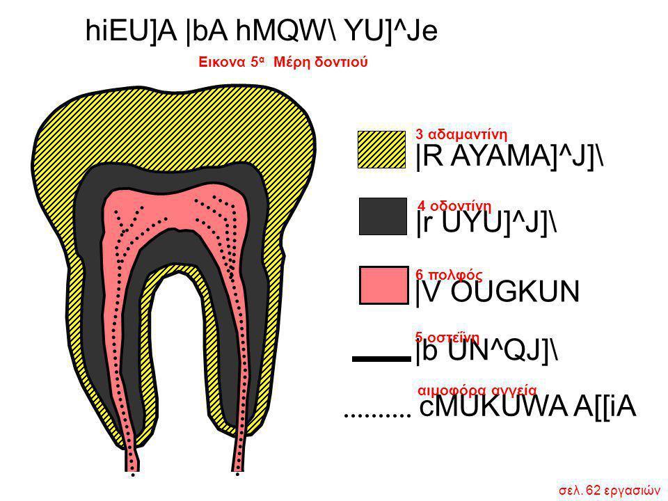 Εικονα 5 α Μέρη δοντιού hiEU]A  bA hMQW\ YU]^Je  R AYAMA]^J]\  r UYU]^J]\  V OUGKUN  b UN^QJ]\ αιμοφόρα αγγεία cMUKUWA A[[iA 3 αδαμαντίνη 4 οδοντίνη 6