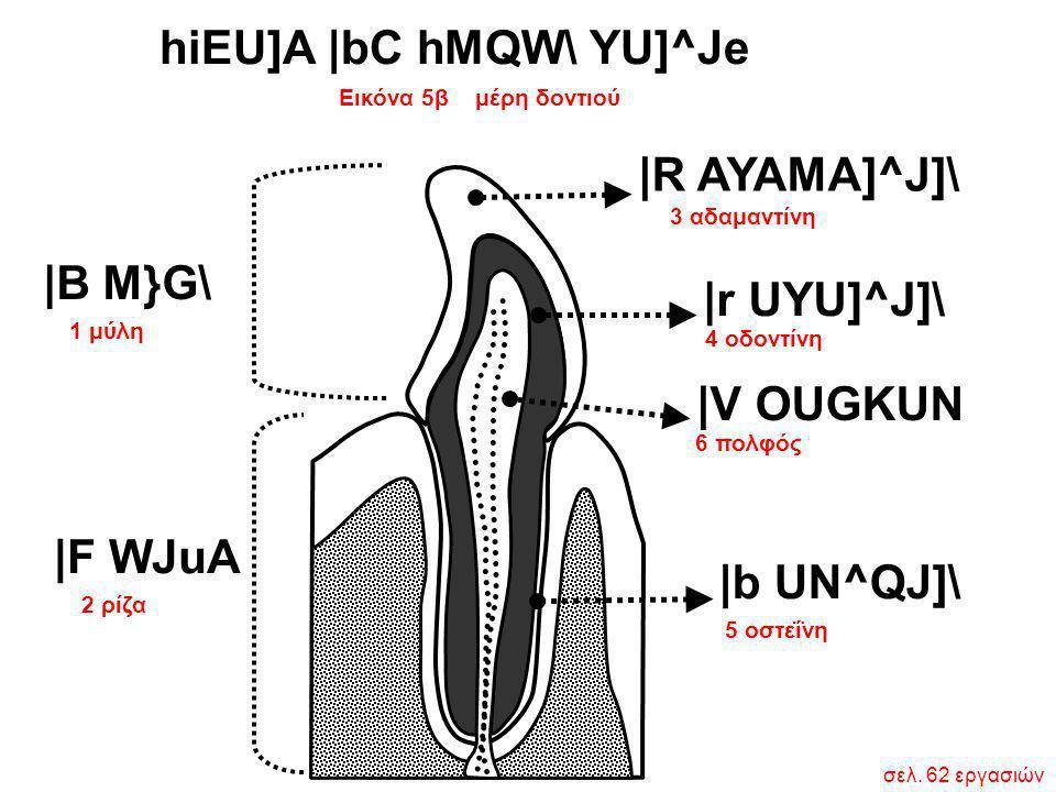 1 μύλη 2 ρίζα  B M}G\  F WJuA 3 αδαμαντίνη 5 οστεΐνη 6 πολφός  R AYAMA]^J]\  r UYU]^J]\  V OUGKUN  b UN^QJ]\ 4 οδοντίνη Εικόνα 5β μέρη δοντιού hiEU]A