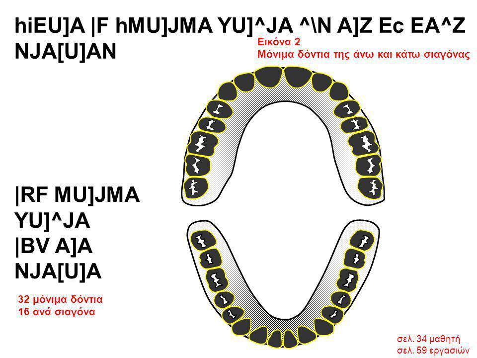 σελ. 34 μαθητή σελ. 59 εργασιών hiEU]A  F hMU]JMA YU]^JA ^\N A]Z Ec EA^Z NJA[U]AN Εικόνα 2 Μόνιμα δόντια της άνω και κάτω σιαγόνας 32 μόνιμα δόντια 16