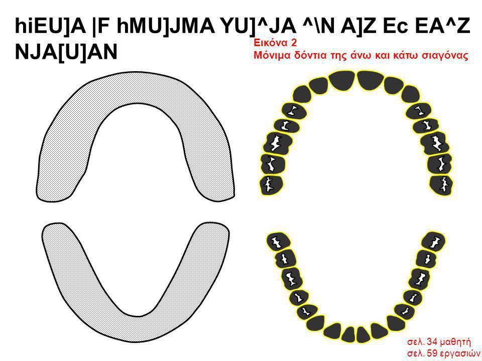 σελ. 34 μαθητή σελ. 59 εργασιών hiEU]A  F hMU]JMA YU]^JA ^\N A]Z Ec EA^Z NJA[U]AN Εικόνα 2 Μόνιμα δόντια της άνω και κάτω σιαγόνας