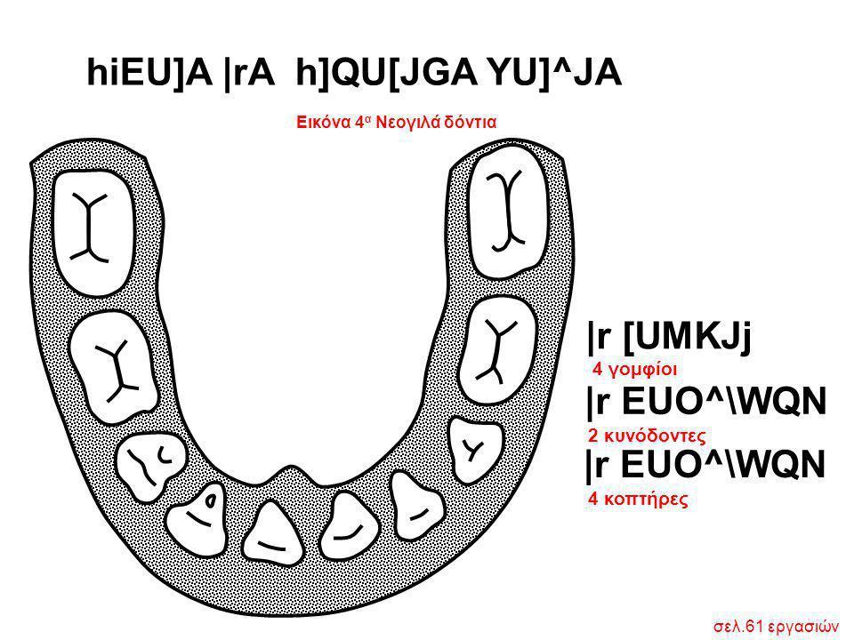 Εικόνα 4 α Νεογιλά δόντια hiEU]A  rA h]QU[JGA YU]^JA  r EUO^\WQN  r [UMKJj 4 γομφίοι 2 κυνόδοντες 4 κοπτήρες σελ.61 εργασιών