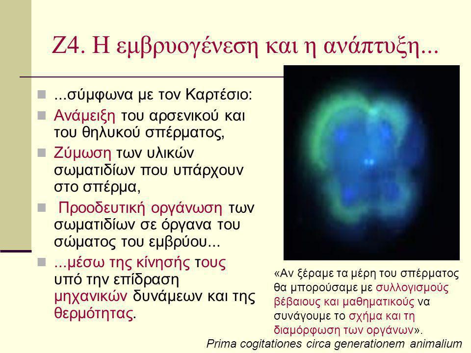 Ζ4. Η εμβρυογένεση και η ανάπτυξη......σύμφωνα με τον Καρτέσιο: Ανάμειξη του αρσενικού και του θηλυκού σπέρματος, Ζύμωση των υλικών σωματιδίων που υπά