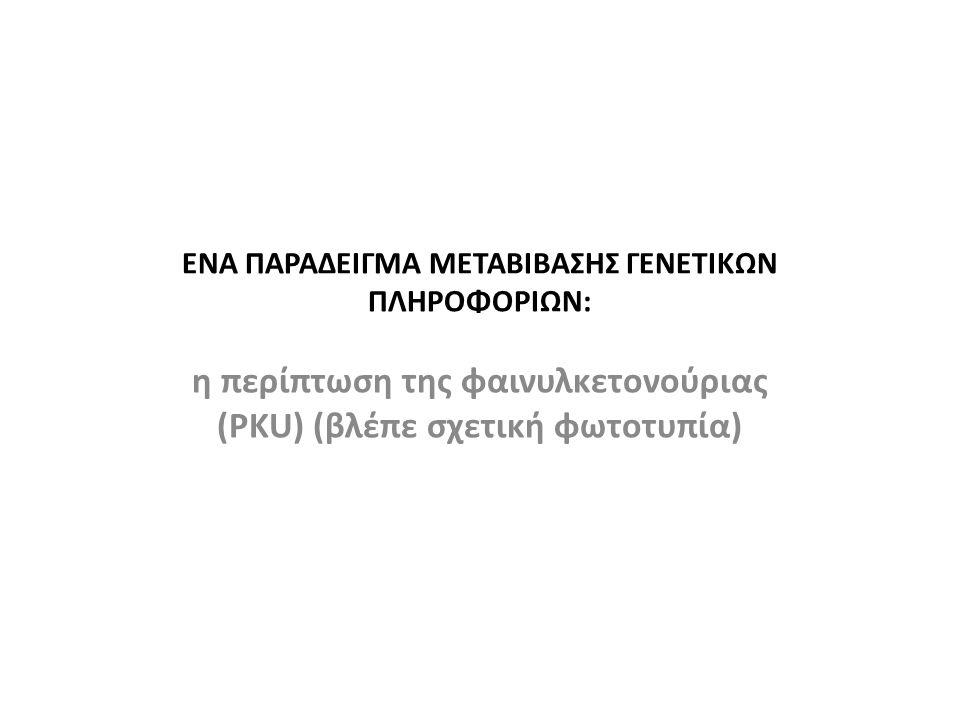 ΕΝΑ ΠΑΡΑΔΕΙΓΜΑ ΜΕΤΑΒΙΒΑΣΗΣ ΓΕΝΕΤΙΚΩΝ ΠΛΗΡΟΦΟΡΙΩΝ: η περίπτωση της φαινυλκετονούριας (PKU) (βλέπε σχετική φωτοτυπία)