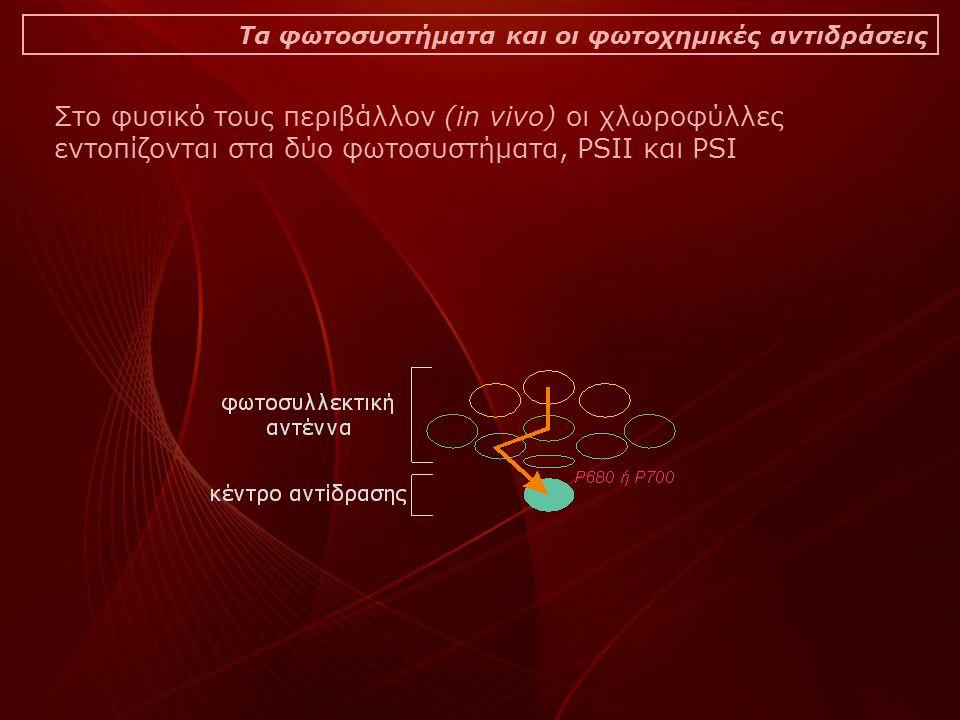 Στο φυσικό τους περιβάλλον (in vivo) οι χλωροφύλλες εντοπίζονται στα δύο φωτοσυστήματα, PSIΙ και PSI Τα φωτοσυστήματα και οι φωτοχημικές αντιδράσεις