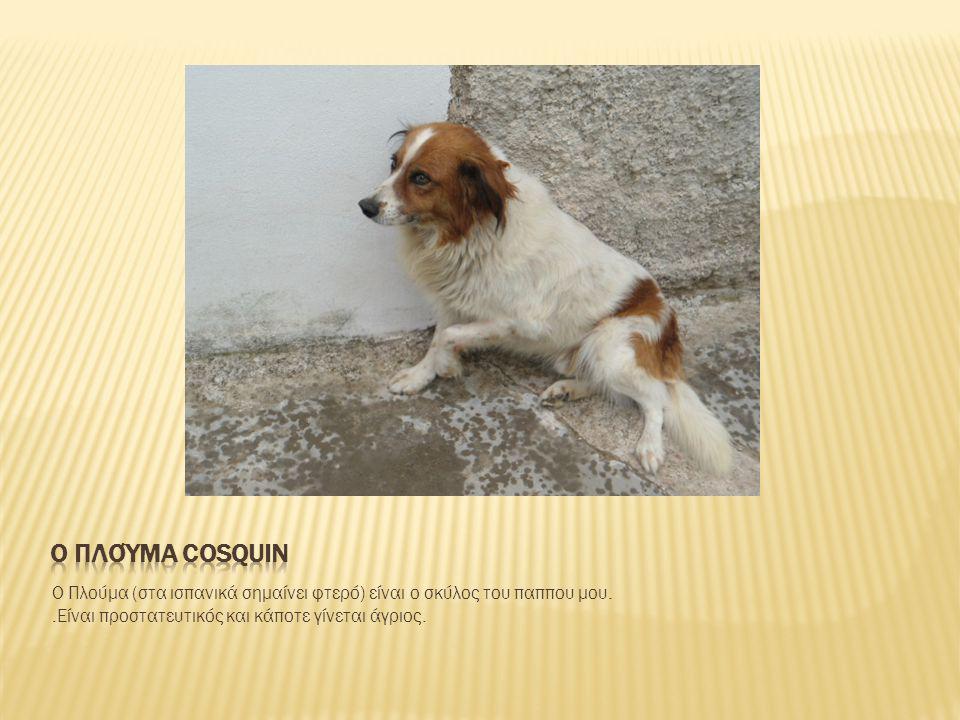 Ο Πλούμα (στα ισπανικά σημαίνει φτερό) είναι ο σκύλος του παππου μου..Είναι προστατευτικός και κάποτε γίνεται άγριος.