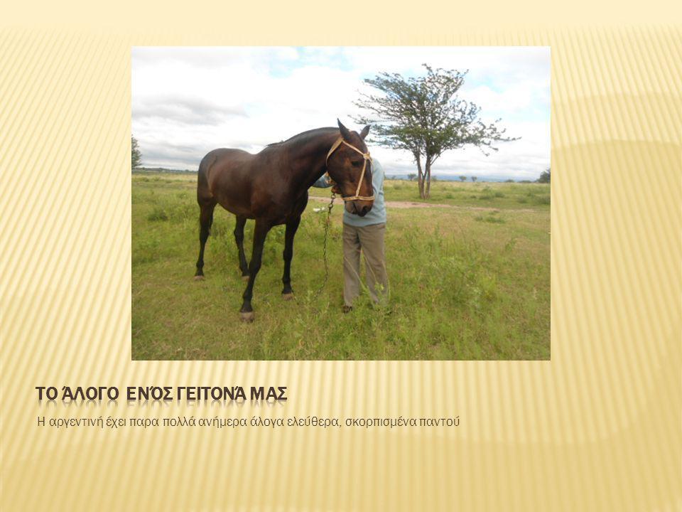 Η αργεντινή έχει παρα πολλά ανήμερα άλογα ελεύθερα, σκορπισμένα παντού