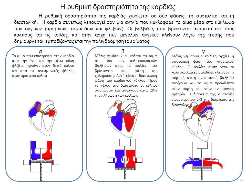 Η ρυθμική δραστηριότητα της καρδιάς 11 Μόλις γεμίσουν οι κόλποι το αίμα ρέει δια των κολποκοιλιακών βαλβίδων προς τις κοιλίες που βρίσκονται στη φάση