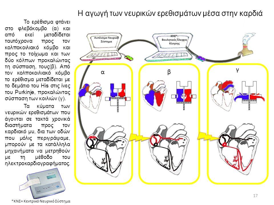 Η αγωγή των νευρικών ερεθισμάτων μέσα στην καρδιά Αυτόνομο Νευρικό Σύστημα ΚΝΣ*, Βουλητικός Έλεγχος Κίνησης *ΚΝΣ= Κεντρικό Νευρικό Σύστημα 17 Το ερέθι