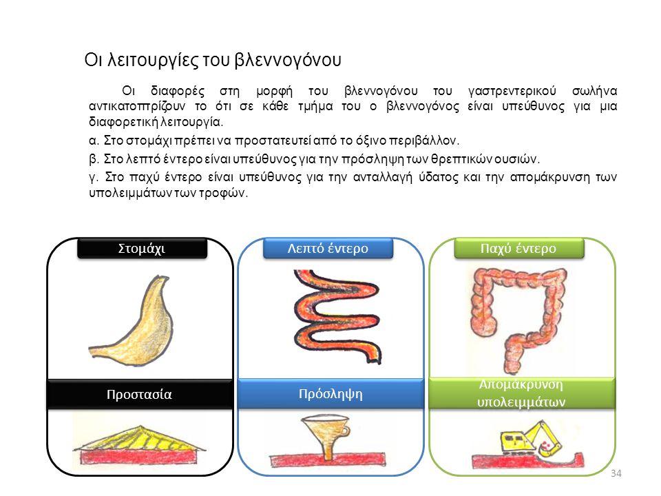 Οι λειτουργίες του βλεννογόνου 34 Οι διαφορές στη μορφή του βλεννογόνου του γαστρεντερικού σωλήνα αντικατοπτρίζουν το ότι σε κάθε τμήμα του ο βλεννογό