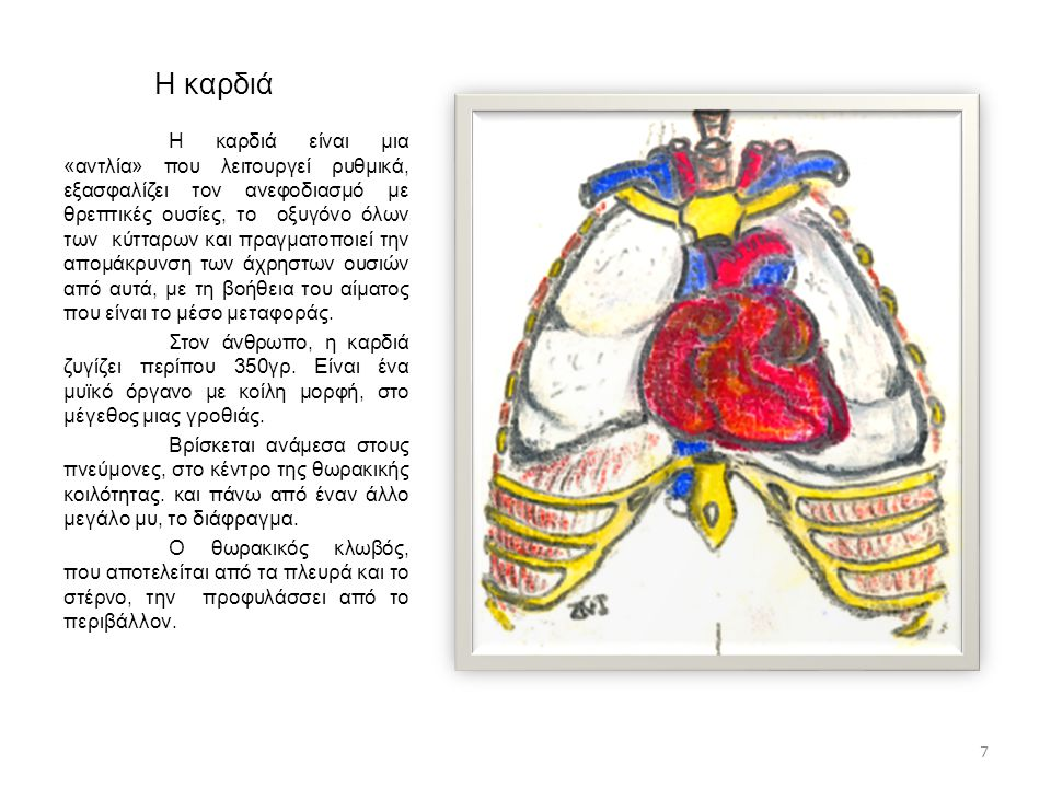 Η καρδιά Η καρδιά είναι μια «αντλία» που λειτουργεί ρυθμικά, εξασφαλίζει τον ανεφοδιασμό με θρεπτικές ουσίες, το οξυγόνο όλων των κύτταρων και πραγματ