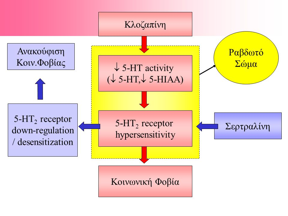  5-ΗΤ activity (  5-ΗΤ,  5-ΗIAA) 5-ΗΤ 2 receptor hypersensitivity Κοινωνική Φοβία Σερτραλίνη 5-ΗΤ 2 receptor down-regulation / desensitization Ανακούφιση Κοιν.Φοβίας Ραβδωτό Σώμα