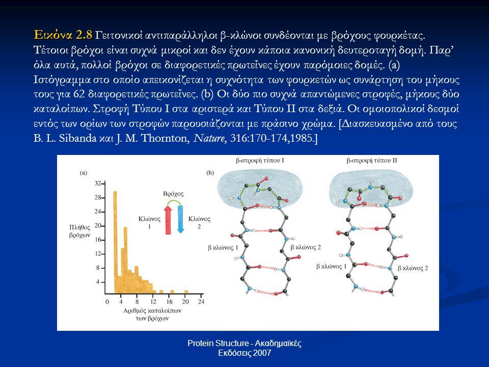 Protein Structure - Ακαδημαϊκές Εκδόσεις 2007 Εικόνα 2.8 Εικόνα 2.8 Γειτονικοί αντιπαράλληλοι β-κλώνοι συνδέονται με βρόχους φουρκέτας. Τέτοιοι βρόχοι